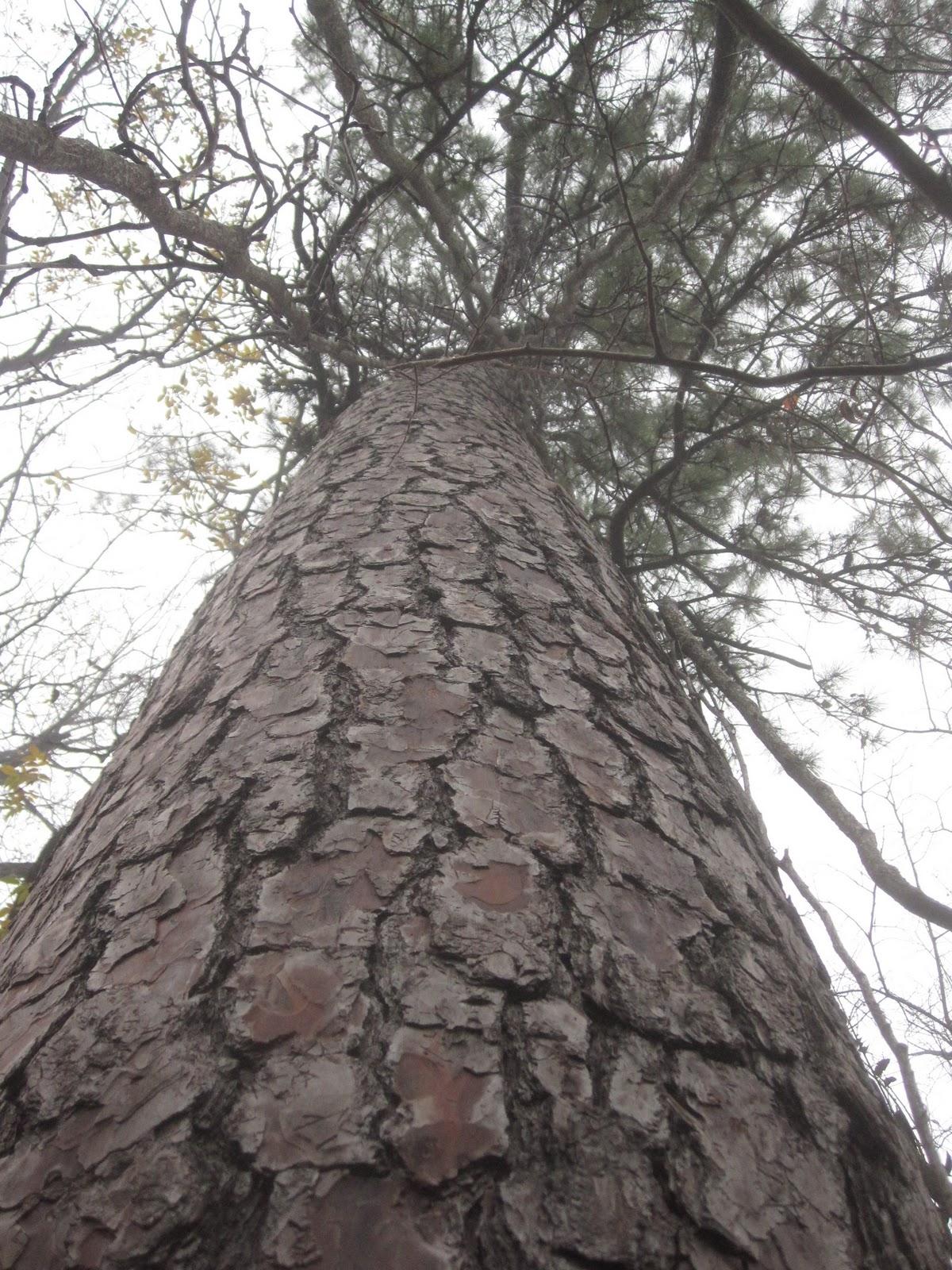 Tropical Texana: A TRIBUTE TO 500 MILLION TEXAS TREES