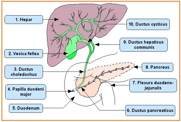 Test Lesan Pencernaan Inti Sari Biologi