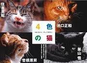 <b>写真集「4色の猫」(YOIRO no NEKO)</b>