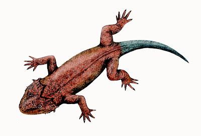 vertebrados prehistoricos Lanthanosuchus