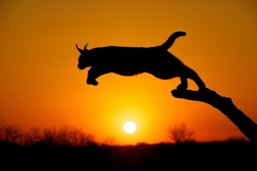12. Leopard by Scott Grubb
