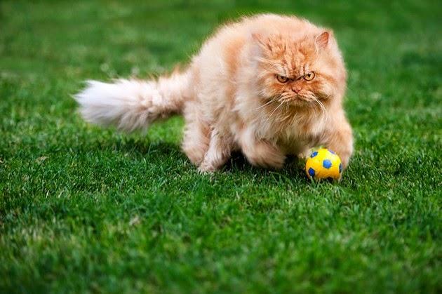 hilarious-cat-3