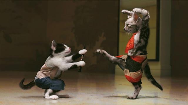 قطط مضحكون يرقصون الباليه