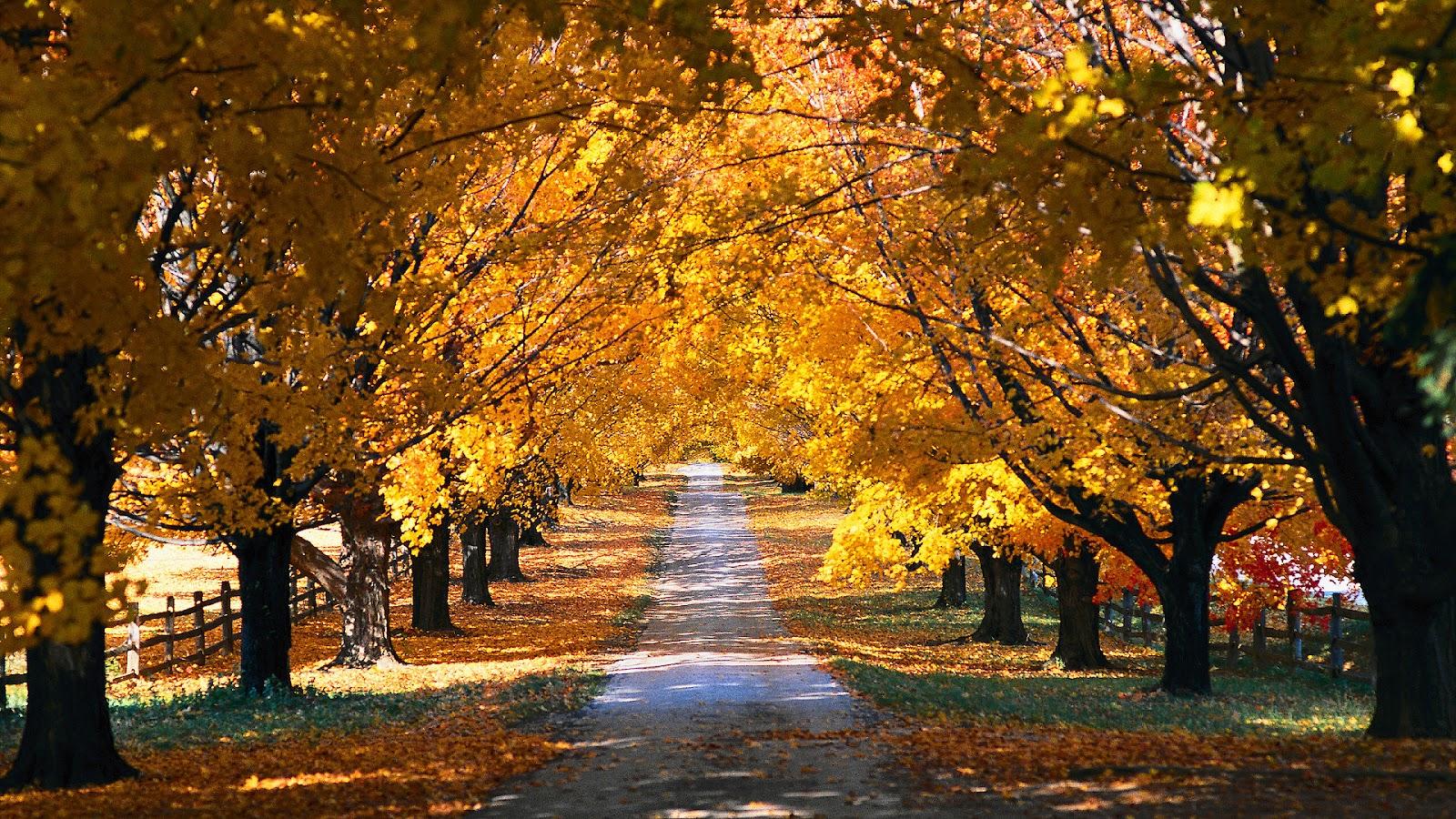 http://3.bp.blogspot.com/-AB2TwWfKLmI/UFL559sKE1I/AAAAAAAAHog/PG-SMncxng8/s1600/hd-herfst-achtergrond-met-een-weg-tussen-de-bomen-door-hd-herfst-wallpaper.jpg