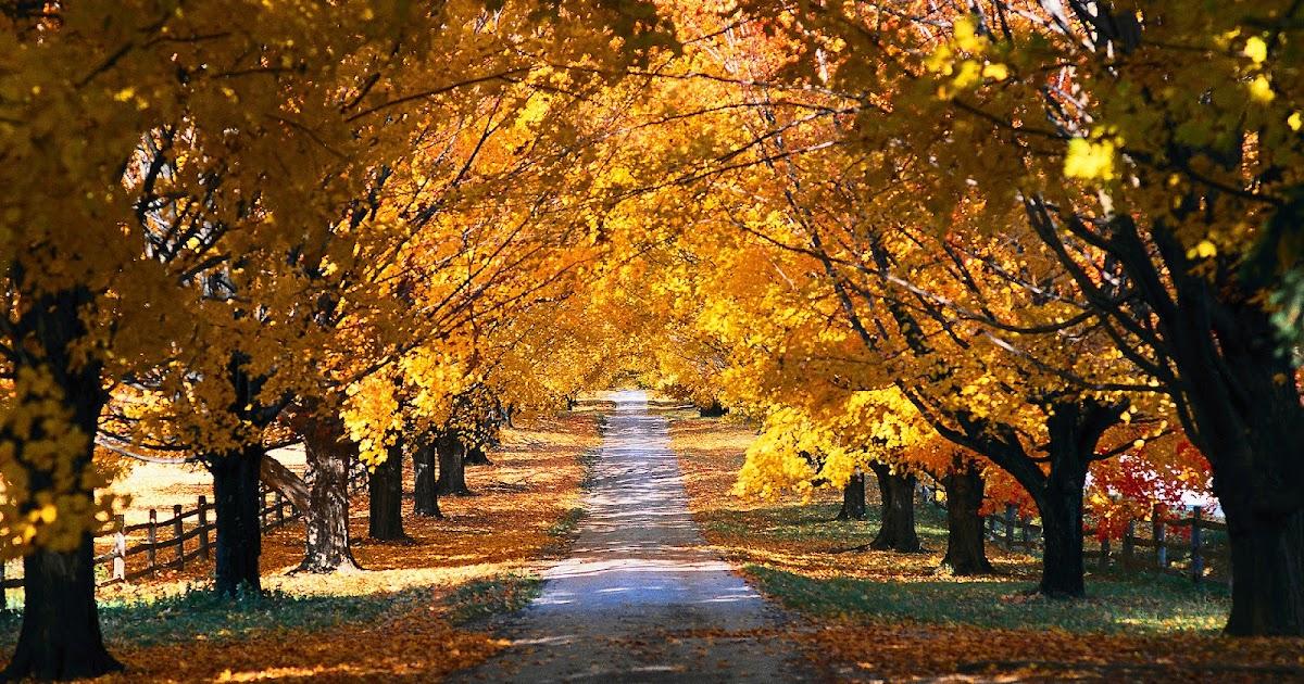 Citaten Herfst Free : Herfst achtergrond met bomen mooie leuke achtergronden