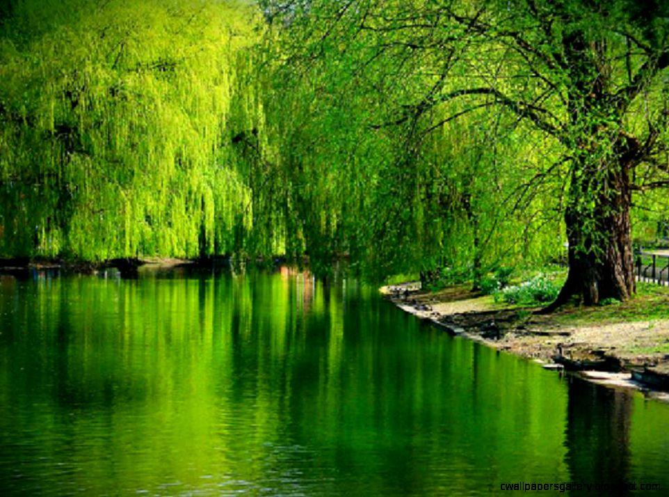 Beautiful Lake and Trees