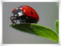 Ladybird Animal Pictures