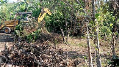 upah buldozer,bulldozer,weschairs,cara tebang pokok,pokok,tebang