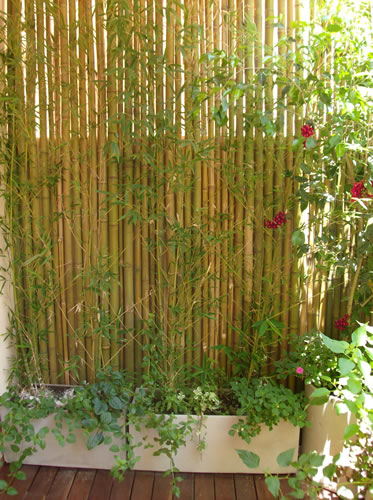 Baño Con Jardin Interior:Neo arquitecturaymas: Decorar con bambú