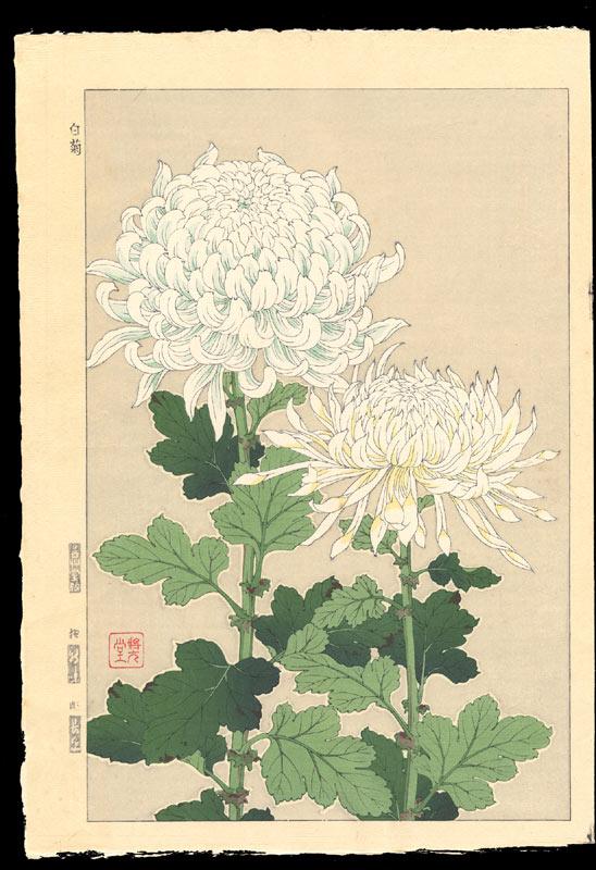 Kawarazaki Shodo Белые хризантемы. 1954