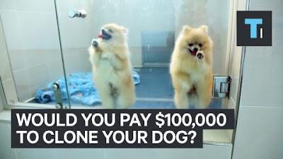Quảng cáo giá nhân bản 1 cặp chó cảnh 100.000 $