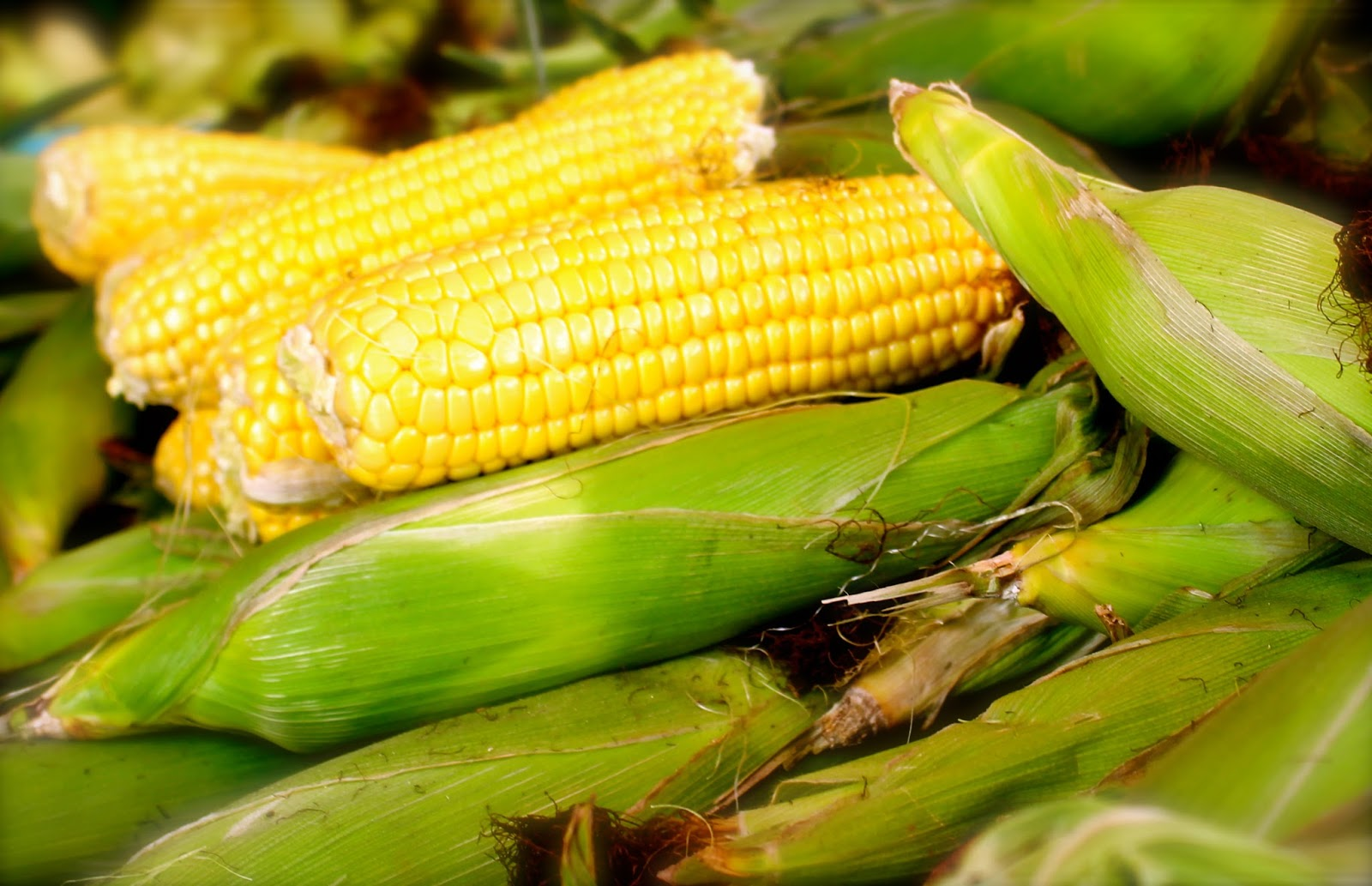 corn cobs Corn cobs, wholesale various high quality corn cobs products from global corn cobs suppliers and corn cobs factory,importer,exporter at alibabacom.