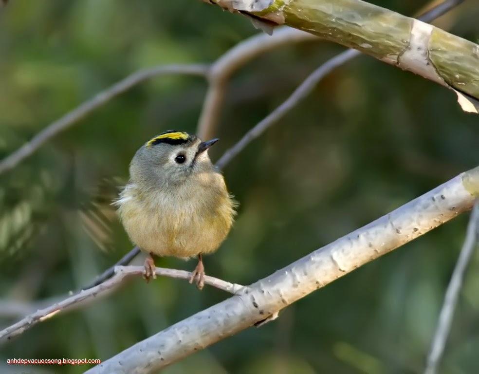 Ảnh thiên nhiên: Chú chim nhỏ 4