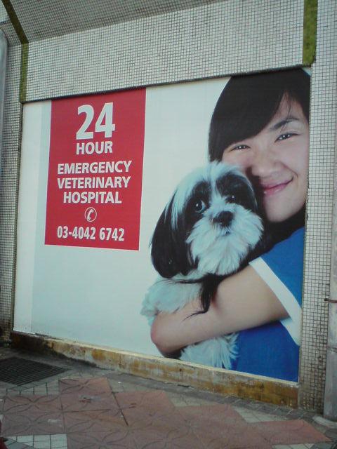 pet crazee 24 hour pet hospital