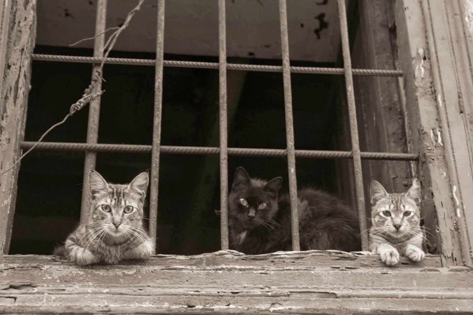 Gatos en Lima