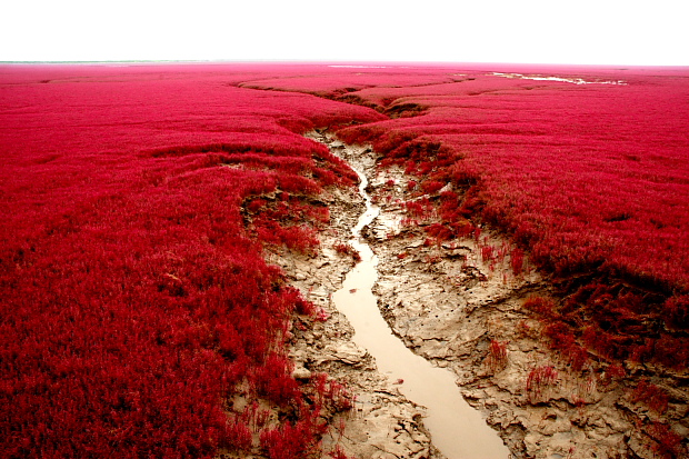 Amazing Red Beach