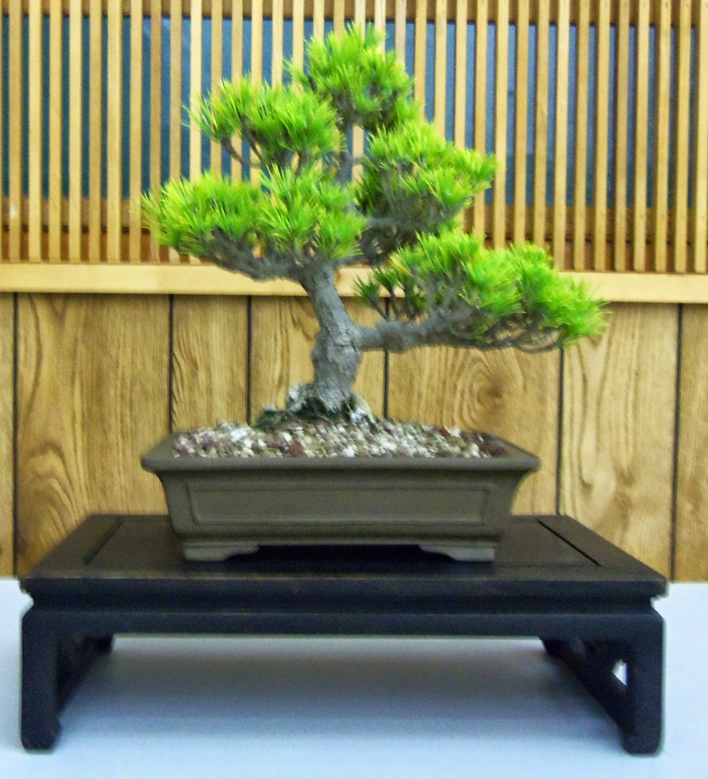 Santa Maria Bonsai Club August 2014