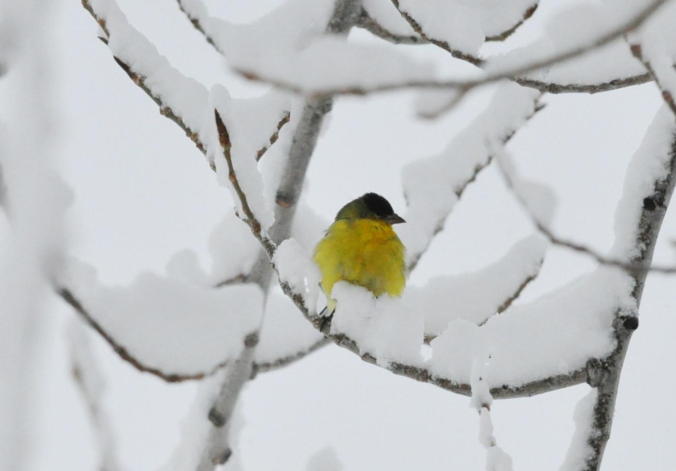 White bird essay
