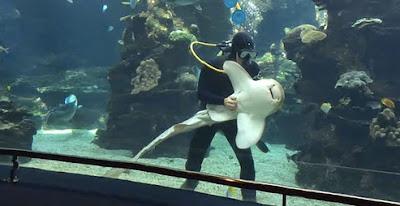 Αυτός είναι ο πιο 'χαδιάρης' καρχαρίας στον κόσμο