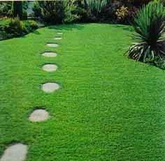 Libra cesped semilla canchas futbol voley golf jardines - Semillas de cesped para jardin ...