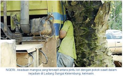 Tersepit Celah Pokok Kelapa Sawit