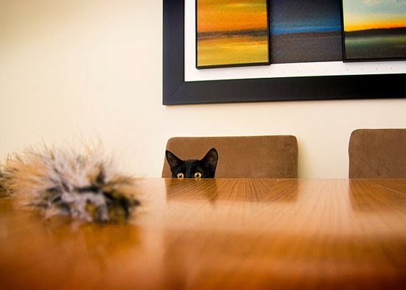 https://www.etsy.com/listing/125515979/cat-photo-5x7-peek-playtime-fine-art-pet?ref=favs_view_1