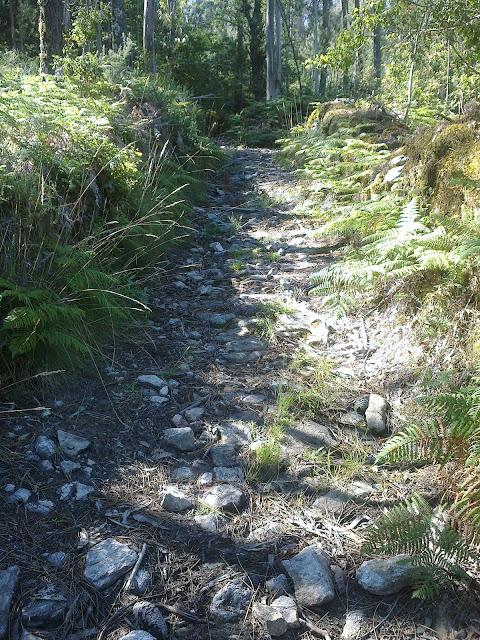 Pista forestal ruta de senderismo san lois