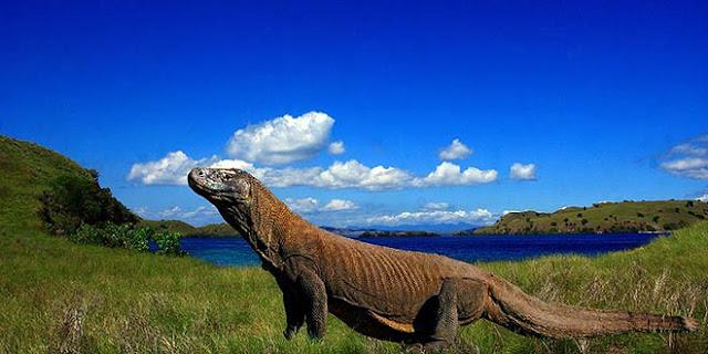 Keajaiban yang Berada di Pulau Komodo
