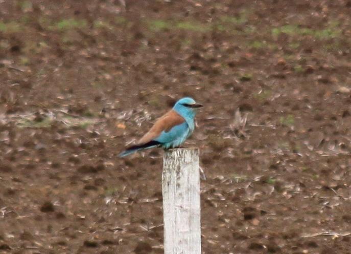 Bird of the Year 2012: