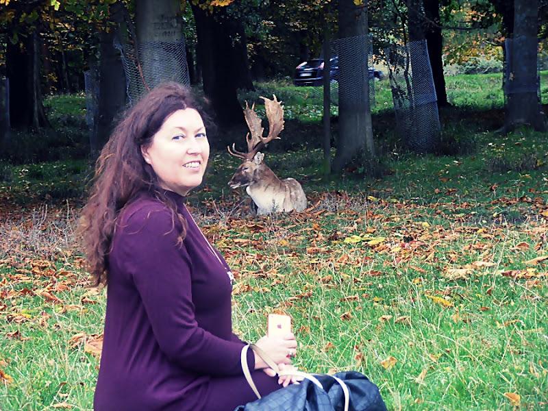 Daniele w parku Phoenix/ Fallow Deer in Phoenix Park….