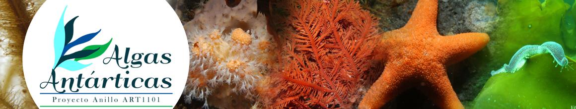 Algas Antárticas - Proyecto Anillo ART1101