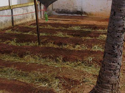 terra, compostagem, adubo e horta