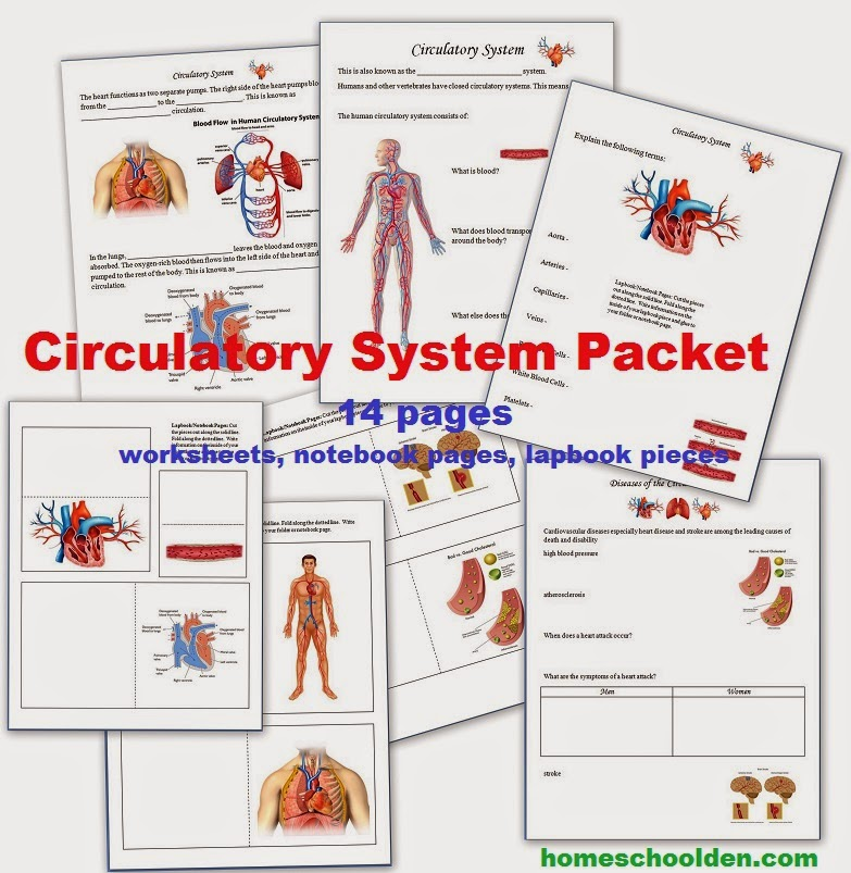 The homeschool den for Home circulation system