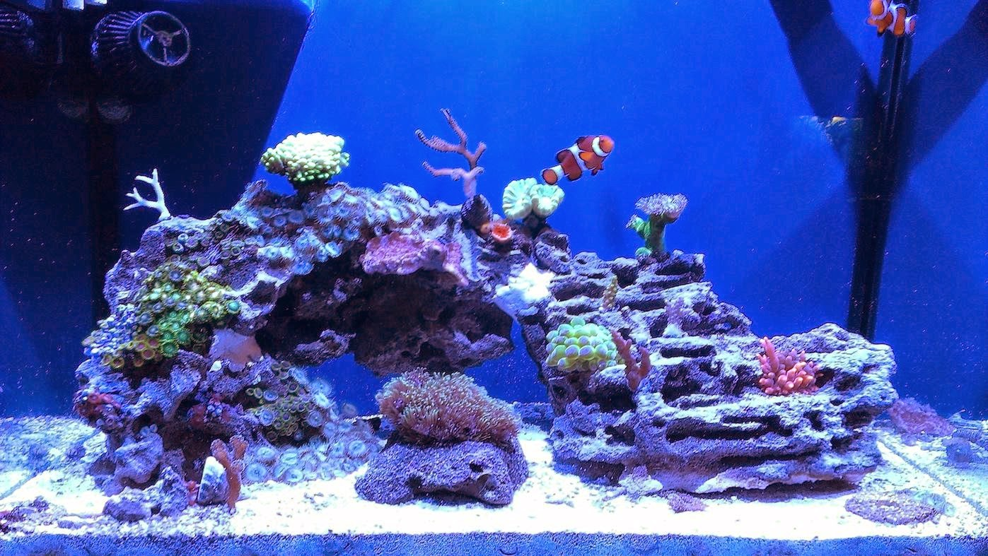 Aquascape Eye Candy 11 Examples For Inspiration Marine
