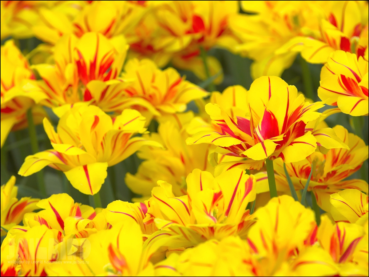 Coloring Book  Botanical Flowers  amazoncom