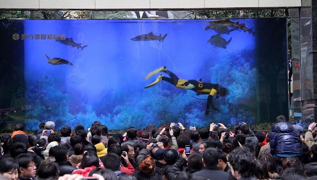 Accidente acuario Shangai