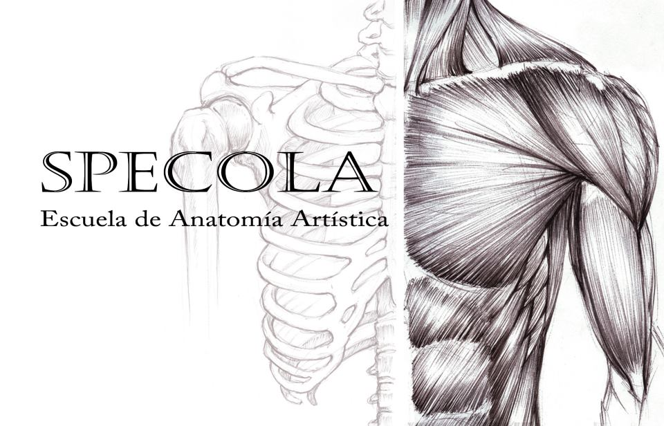 Alexis Tuesta Ilustrador: SPECOLA Taller de Anatomía Artística