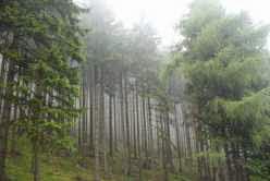 Leśne video <br>(...vidéo de la forêt...)