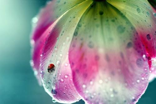 صور جميلة للمطر فصل الشتاء