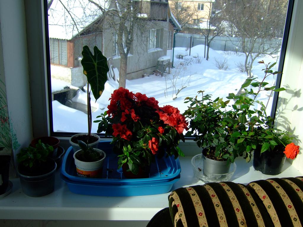 Комнатные цветы для зелени