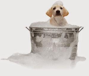 Formation de toilettage pour chien