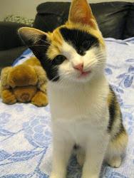 Sissi,nata il 30  giugno 2012