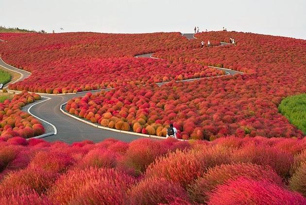 autumn-colors-6