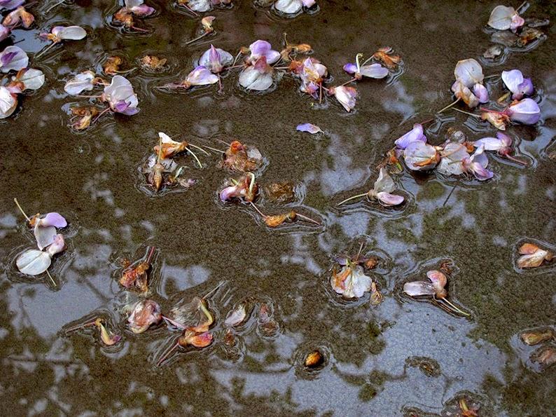 Lost in arles le jardin du quai part two - Le jardin du quai isle sur la sorgue ...