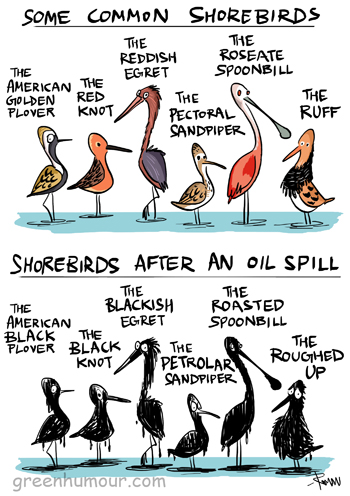 Green Humour Birds And Oil Spills