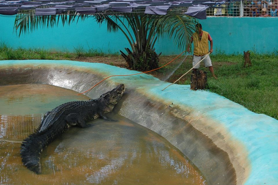 life of a kageron lolong biggest crocodile captive is dead