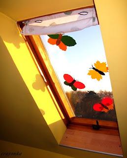 motyle na oknie