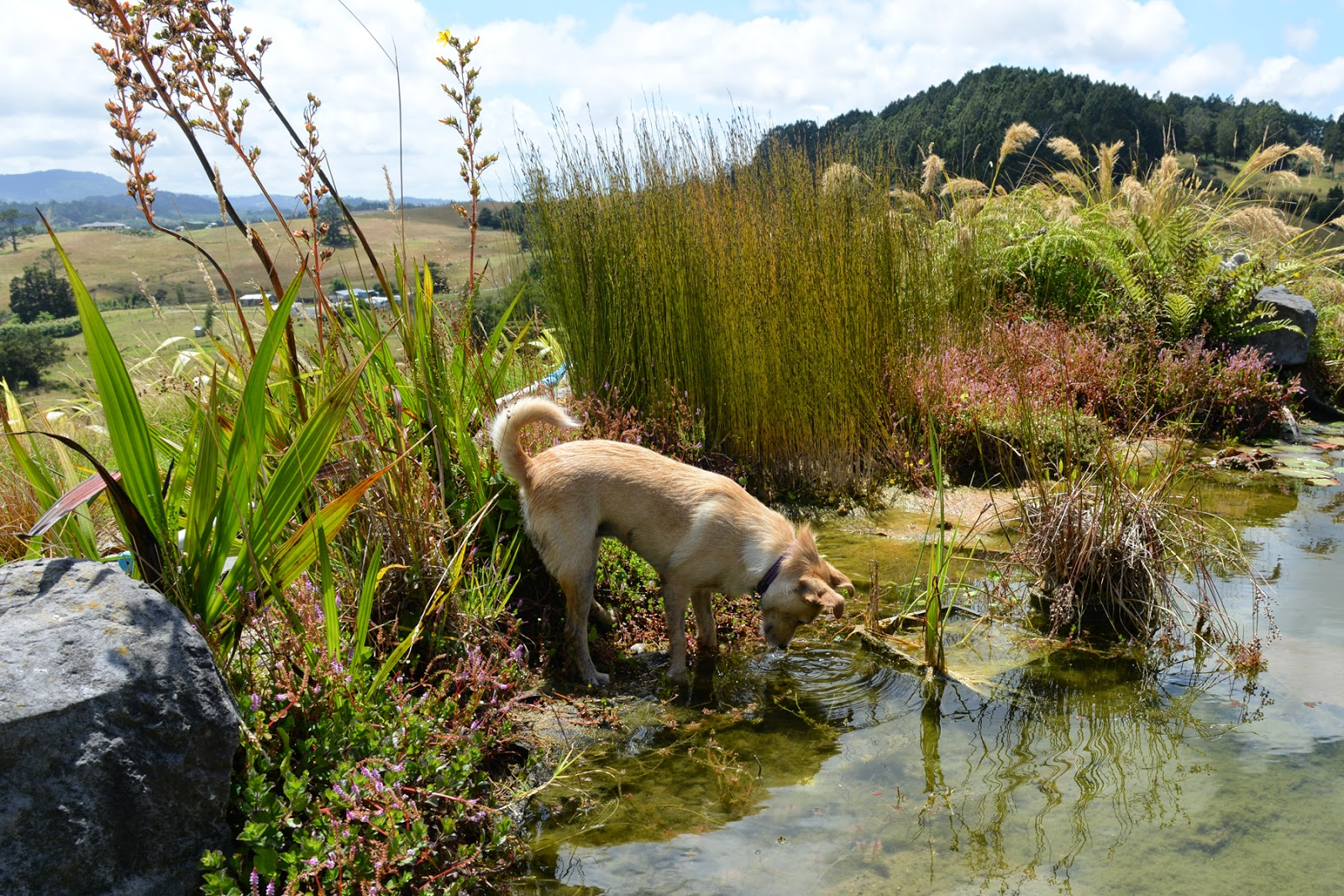 Dog pond plants fish