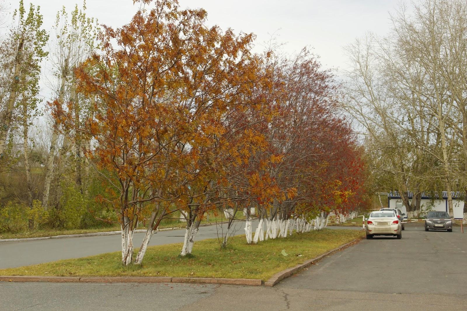 осенняя аллея, рябины, пейзажное фото