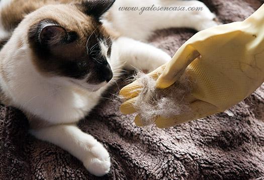 C mo quitar los pelos de gato con guantes de fregar - Como quitar los pelos de gato de la ropa ...